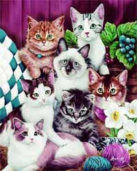Kedi burçları